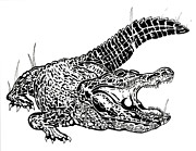 Wheel Drawings - Gator Feed by Jack Norton