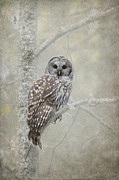 Textured Bird Posters - Gaurdian of the Woods Poster by Reflective Moments  Photography and Digital Art Images
