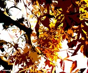 Autumn Trees Mixed Media Prints - Gazing Into The Autumn Trees Print by Patrick J Murphy