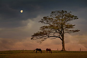 Horse Hill Prints - Gazing Peacefully Print by Nancy Rose