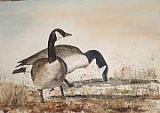 Canadian Geese Paintings - Geese 4 by Diane Ziemski