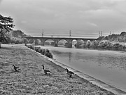 Geese Along The Schuylkill River Print by Bill Cannon