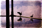 Bird Collage Prints - Geese at Dawn Print by Carol Leigh