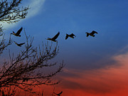 Idaho Photos - Geese Flying Home - Canadian Geese by Photography Moments - Sandi