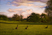 Rolling Clouds Framed Prints - Geese on Painted Green Framed Print by Bill Tiepelman