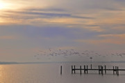 Geese Digital Art Prints - Geese Over the Chesapeake Print by Bill Cannon