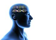 Individuality Posters - Genetic Individuality, Male Head With Dna Poster by Pasieka