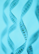 Helix Posters - Genetic Sequence Poster by Lawrence Lawry