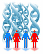 Lifestyle Photo Posters - Genetic Sexuality Poster by Victor Habbick Visions