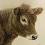 Bovines Posters - Gentle Calf Poster by Margaret Stockdale
