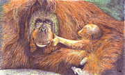 Orang Utan Drawings Posters - Gentle Giant Poster by John Hebb