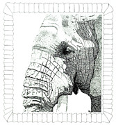 Placid Drawings - Gentle Giant by Malc McHugh