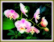 Orchids Digital Art Prints - Gentleness and Grace Print by Mindy Newman