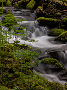 Olympic National Park Prints - Gently Falling Print by Mike Reid
