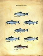 Trout Prints - Genus oncorhynchus Print by Logan Parsons