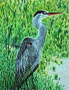 Blue Heron Drawings Prints - George - The Blue Heron Print by Tina Storey