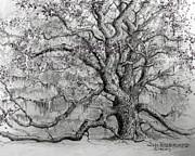 Jim Hubbard - Georgia - Live Oak
