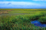 St. Simons Island Art - Georgia Coastal Prairie by Thomas R Fletcher