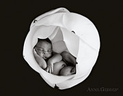White Tapestries Textiles Prints - Gerald in Magnolia Print by Anne Geddes