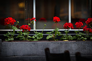 Red Geraniums Photo Prints - Geranium Flower Box Print by Doug Sturgess