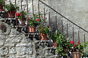 Potted Plant Posters - Geranium Potplants On Stairs Poster by Marcel ter Bekke