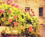 Old City Prints Prints - Geraniums of Jerusalem Print by Linde Townsend