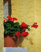 Red Geraniums Prints - Geraniums Peeking Out Print by Sharon Kalniz