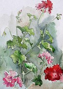 Stephanie Aarons Painting Posters - Geraniums Poster by Stephanie Aarons