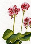 Red Geraniums Prints - Geraniums Print by Wendy Cunico