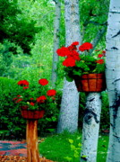 Red Geraniums Digital Art Posters - Geraniums with Aspen Poster by Christine S Zipps