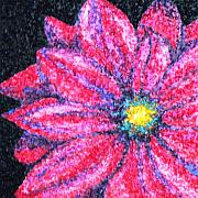 Landscape Drawings - Gerber Daisy by Amanda Schambon