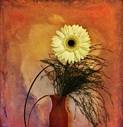 Histogram Photos - Gerber Daisy Still Life by Marsha Heiken