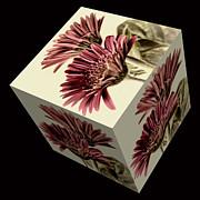 Steve Purnell - Gerbera Cube on Black