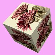Steve Purnell - Gerbera Cube on Pink