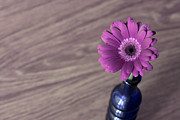 Happy Pyrography - Gerbera into blue Vase by Soultana Koleska