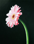Petal Pastels Prints - Gerbera Print by Michael King