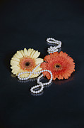 Black Pearls Prints - Gerberas With Pearls Print by Joana Kruse