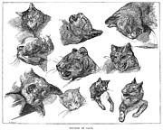 Gericault Art - Gericault: Cats by Granger