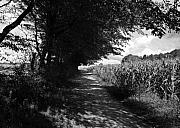 Deutschland Art - German Path Black and White by Edward Myers
