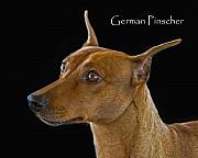 Pinscher Prints - German Pinscher Print by Larry Linton