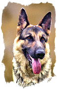 Shephard Prints - German Shephard Print by Tom Schmidt