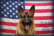 Police Dog Prints - German Shepherd - U.S.A. Print by Sandy Keeton