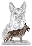 Shepherd Drawings - German Shepherd Art Print - color tinted by Kelli Swan
