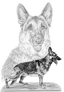 Kelly Drawings Prints - German Shepherd Dogs Print Print by Kelli Swan