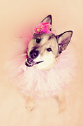 Close-up Portrait Posters - German Shepherd Mix Dog Dressed As Ballerina Poster by R. Nelson