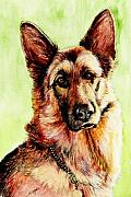 Fitzsimons Art - German Shepherd by Morgan Fitzsimons