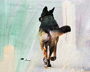 German Shepherd Dog Framed Prints - German Shepherd Taking a Walk Framed Print by Jai Johnson