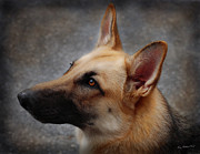 Terry Kirkland Cook Framed Prints - German Shepherd Framed Print by Terry Kirkland Cook