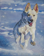 German Shepard Posters - German Shepherd white in snow Poster by Lee Ann Shepard