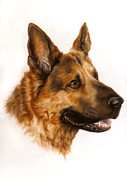 Breed Pastels Posters - German Sheppard Poster by Patricia Ivy